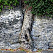 Tree In Stone Art Print