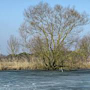 Tree On Frozen Lake Art Print