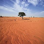 Tree On Landscape Art Print