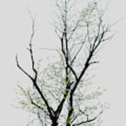 Tree Series Five Art Print