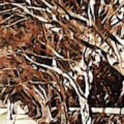 Treelined Art Print