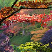 Trees In A Garden, Butchart Gardens Art Print