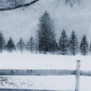 Trees in Frost Valley Art Print