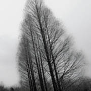 Trees In Winter Without Leaves Art Print