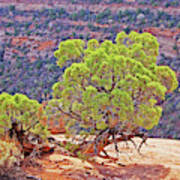 Trees Plateau Valley Colorado National Monument 2871 Art Print