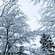Trees With Snow Art Print