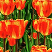 Tulips 2019d Art Print