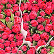 Tulips For Sale At A Flower Market Art Print