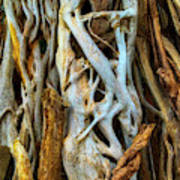 Twisted Tree Limbs Art Print