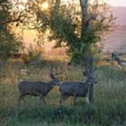 Two Deer Sunset Art Print