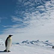 Two Emperor Penguins Art Print