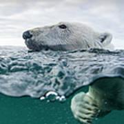 Underwater Polar Bear In Hudson Bay Art Print