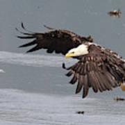 Valdez Eagle One Art Print