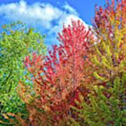 Vibrant Autumn Hues At Cornell University - Ithaca, New York Art Print