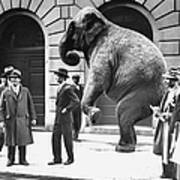 Victory, The G.o.p. Elephant, Stands In Art Print