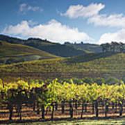 Vineyards Autumn Time In Sonoma Valley Art Print