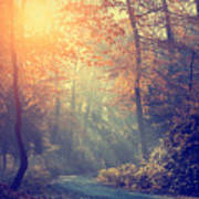 Vintage Photo Of Autumn Forest Art Print
