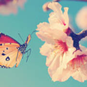Vintage Spring Image With Butterfly And Art Print