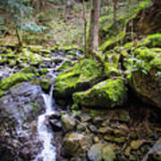 Vivid Green In The Black Forest Art Print