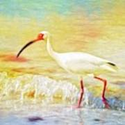 Walking The Waves Of Sanibel Art Print