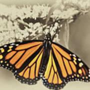Wandering Migrant Butterfly Art Print