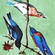 Warbler And Bluebirds 1 Art Print