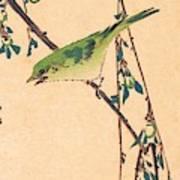 Warbler On A Plum Branch Art Print