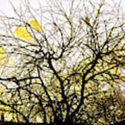 Wasteway Willow 18 Art Print