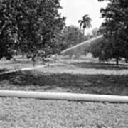 Water Spray Orchard Art Print