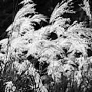 Weed Grass Black And White Art Print