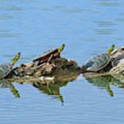Western Painted Turtles Art Print