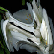 White Rhododendron Art Print