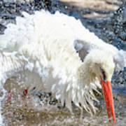 White Stork Fishing Art Print