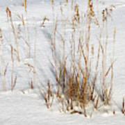 Whitehorse Winter Landscape Art Print