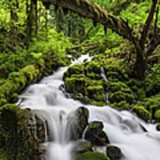 Wild Forest Waterfall Idyllic Green Art Print