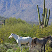 Wild Horses Tonto National Forest Art Print