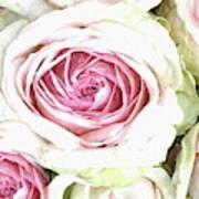 Wild Pink Roses Art Print