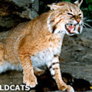 Wildcats Mascot 3 Art Print