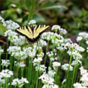 Wildflower Butterfly Art Print