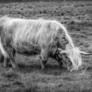 Windblown In Scotland Black And White Art Print