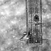 Winter Blessing Chickadee Art Print