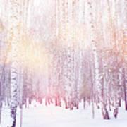 Winter Magic Birch Grove Art Print