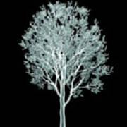 Xray Image Of A Tree Isolated On Black Art Print