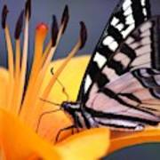 Yellow Swallowtail Butterfly On Lily Flower 020 Art Print