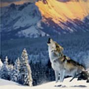 Yellowstone Wolf Art Print