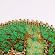 Yemen Chameleon, Close-up Of Skin Art Print