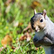 Your Friendly Neighborhood Squirrel Art Print