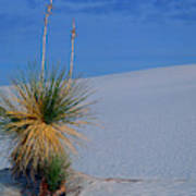 Yucca Plant In Sand Dunes In White Sands National Monument, New Mexico - Newm500 00112 Art Print