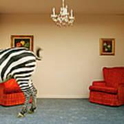 Zebra In Living Room Swishing Tail Art Print