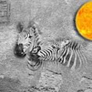 Zebras No 02 Art Print